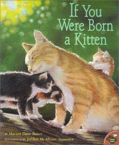 Download If You Were Born A Kitten
